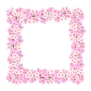 桜のフレーム 正方形のイラスト素材 [FYI03422134]