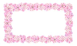 桜のフレーム 長方形のイラスト素材 [FYI03422135]