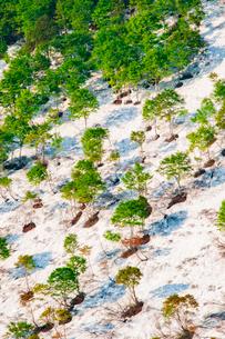 鍋倉山残雪のブナ林新緑の写真素材 [FYI03422230]