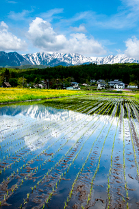 春の美麻 残雪の北アルプス映す田植えの済んだ水田の写真素材 [FYI03422267]