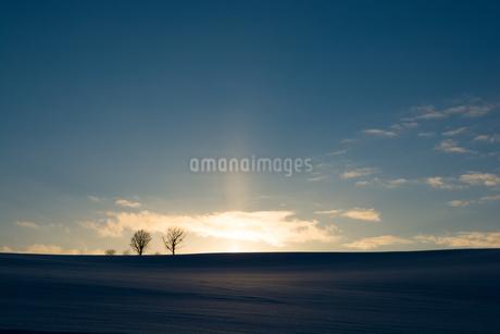 夕暮の空と冬木立 美瑛町の写真素材 [FYI03422317]