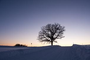 冬の夕暮れの丘の冬木立 美瑛町の写真素材 [FYI03422318]