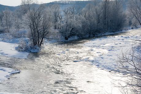 寒い朝の雑木林と川の写真素材 [FYI03422321]