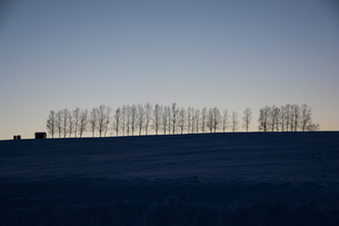 夕暮の空とシラカバ並木 美瑛町の写真素材 [FYI03422327]
