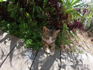 野良猫の写真素材 [FYI03422393]