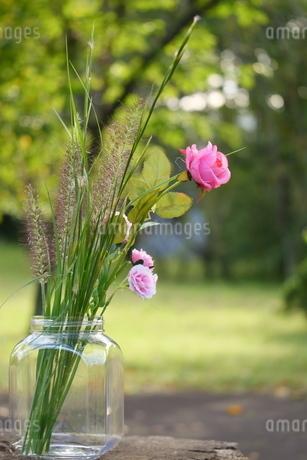 薔薇と野の草の写真素材 [FYI03422396]
