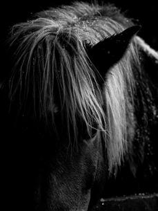 冬の馬の写真素材 [FYI03422461]