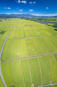 五郎兵衛米の田園と浅間山遠望の写真素材 [FYI03422528]