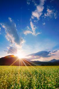 前山の蕎麦畑と夕日と女神岳と子檀嶺岳の写真素材 [FYI03422577]