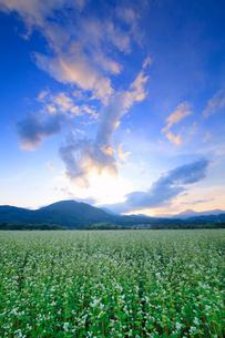 前山の蕎麦畑と女神岳と子檀嶺岳と夕方の空の写真素材 [FYI03422579]
