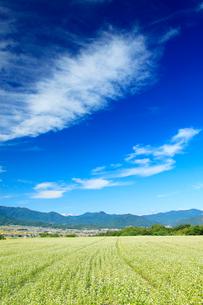 蕎麦畑と子檀嶺岳などの山並みとすじ雲と塩田平の写真素材 [FYI03422597]