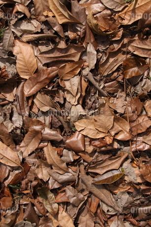 ブラジルの落ち葉の写真素材 [FYI03422646]