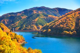 秋の九頭竜湖 紅葉と夢の架け橋を望むの写真素材 [FYI03422665]