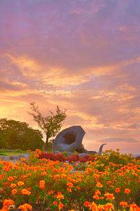 マリーゴールドなどの花畑とホルンのオブジェと朝焼けの写真素材 [FYI03422729]