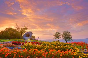 マリーゴールドなどの花畑とホルンのオブジェと朝焼けと木立の写真素材 [FYI03422730]