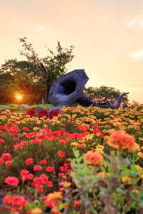 マリーゴールドなどの花畑とホルンのオブジェと朝日の写真素材 [FYI03422732]