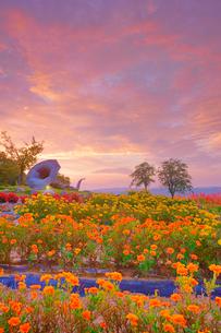 マリーゴールドなどの花畑とホルンのオブジェと朝焼けと木立の写真素材 [FYI03422733]