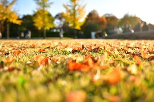芝生に落ちた落ち葉の写真素材 [FYI03422953]