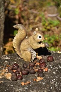 リアルな栗鼠の置物の写真素材 [FYI03422978]