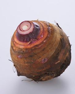 里芋(赤芽)の写真素材 [FYI03422990]