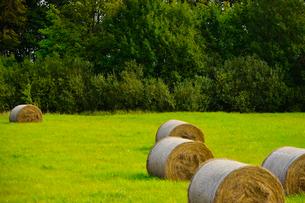 エストニア~ラトビア間車窓から見た干し草ロールのある景観の写真素材 [FYI03423172]