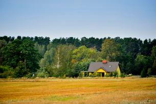 エストニア~ラトビア間車窓から見た沢山の木々に囲まれた黄色い小さな家の景観の写真素材 [FYI03423175]