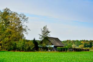 エストニア~ラトビア間車窓から見た沢山の木々に囲まれた小さな家の景観の写真素材 [FYI03423176]