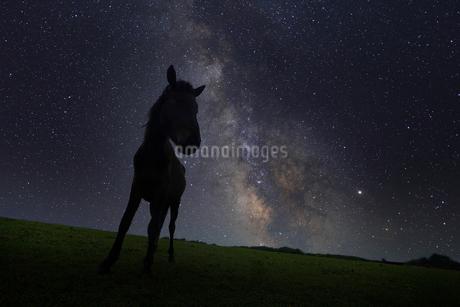 天の川と馬の写真素材 [FYI03423239]