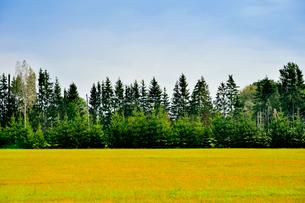 エストニア~ラトビア間車窓から見た沢山の針葉樹の木々と電線のある景観の写真素材 [FYI03423375]