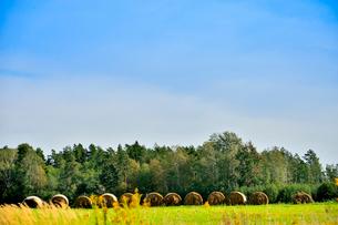 エストニア~ラトビア間車窓から見た沢山の木々に囲まれた干し草ロールのある景観の写真素材 [FYI03423387]