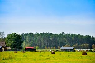 エストニア~ラトビア間車窓から見た沢山の木々に囲まれた家々と牧草ロールのある景観の写真素材 [FYI03423395]