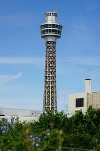 アメリカ山公園から横浜マリンタワーの写真素材 [FYI03423484]