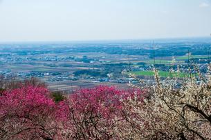 筑波山梅林と関東平野の写真素材 [FYI03423496]
