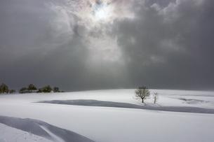 木 雪原 曇 北海道 士別市 川西町 北海道士別市 士別市川西町 の写真素材 [FYI03423555]