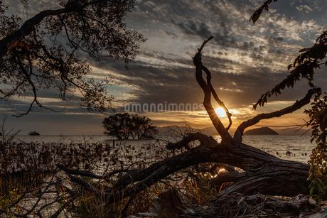琵琶湖 日本 滋賀県 長浜市の写真素材 [FYI03423565]