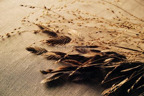 麦の写真素材 [FYI03423705]