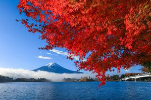 紅葉と富士山 河口湖 富士河口湖町の写真素材 [FYI03423716]