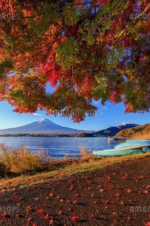 秋の散歩道 富士山 河口湖 富士山 富士河口湖町の写真素材 [FYI03423717]