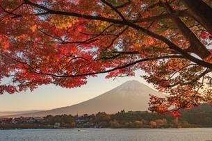 日暮れの紅葉と富士山 富士河口湖町の写真素材 [FYI03423719]
