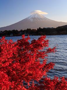 紅葉と富士山の写真素材 [FYI03423721]