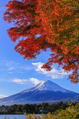 紅葉と富士山 山梨 河口湖の写真素材 [FYI03423725]