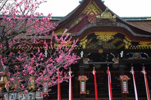 北野天満宮梅の花の写真素材 [FYI03424069]