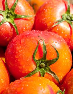 トマト ヘルシーフードの写真素材 [FYI03424592]