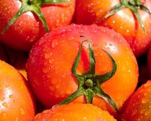 トマト ヘルシーフードの写真素材 [FYI03424594]