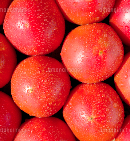 トマト ヘルシーフードの写真素材 [FYI03424595]