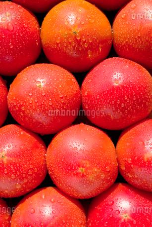 トマト の写真素材 [FYI03424596]