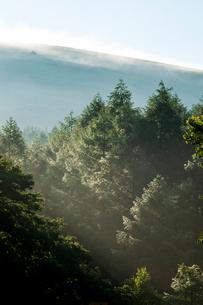 霧ヶ峰高原 朝霧晴れ輝くカラマツ林水滴の写真素材 [FYI03424639]