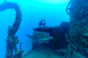 沈没船 駆潜艇の周りを泳ぐシロワニ 小笠原の写真素材 [FYI03424807]