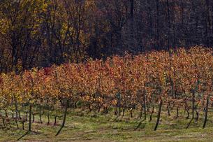 秋の風景の写真素材 [FYI03424849]