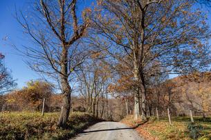 田舎の道の写真素材 [FYI03424967]